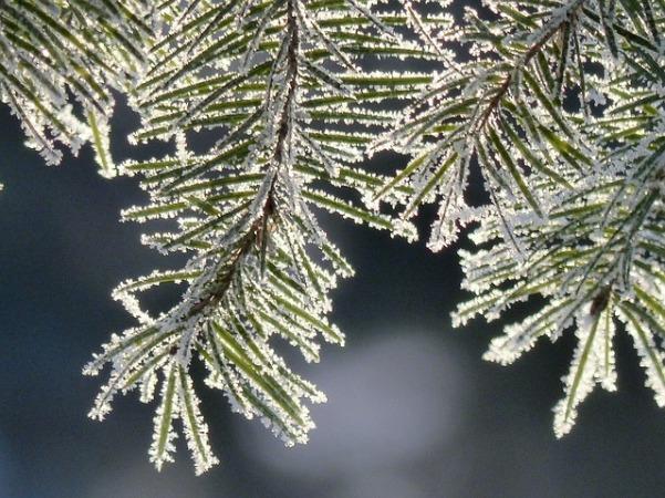 tree-226676_640