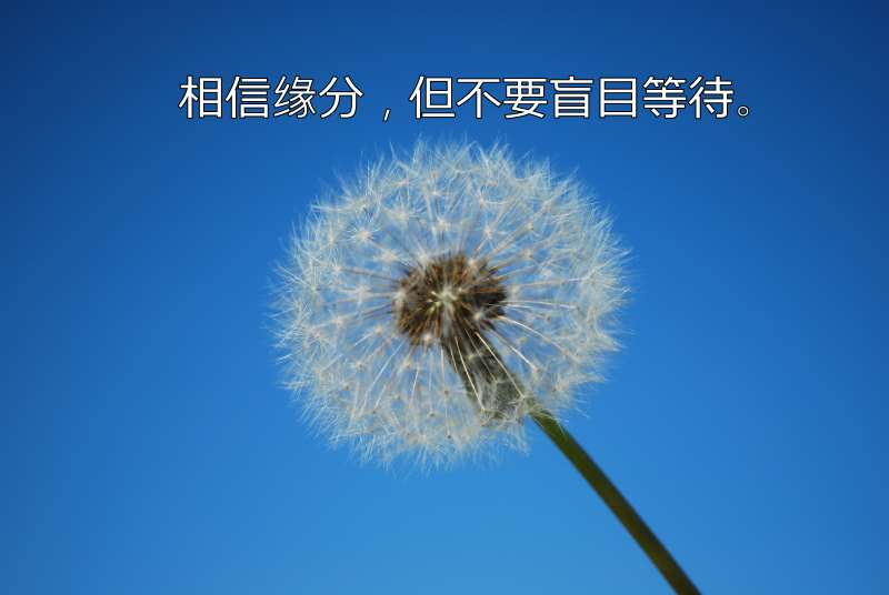 Dandelion with Blue Sky Background
