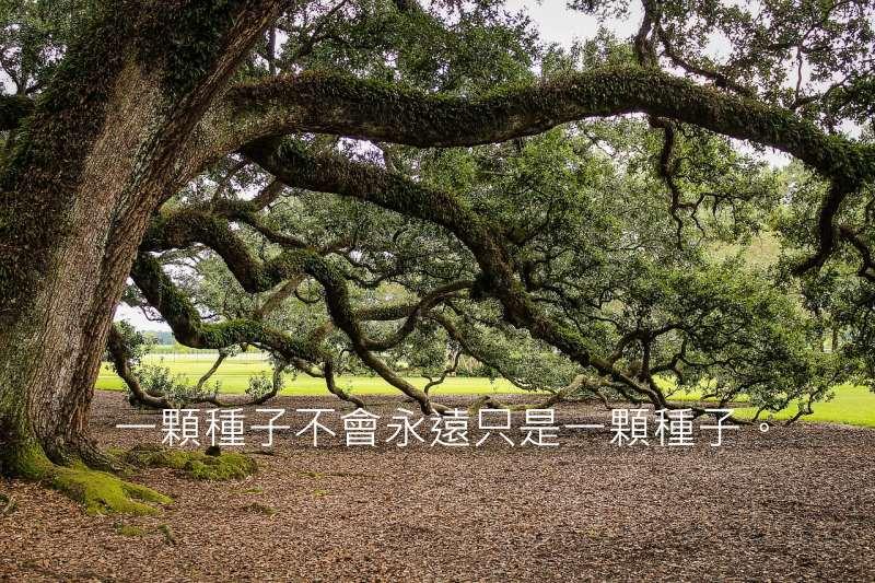 virginia-live-oak-440351_800