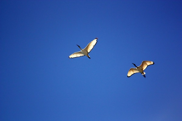 bird-350680_1280