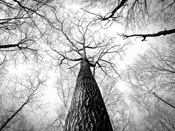 branches-238379_1280