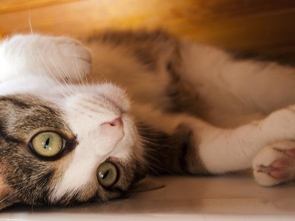 cat-358968_1280