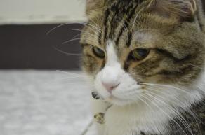 cat-652650_1280