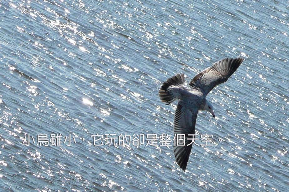 flying-1280