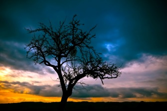 tree-213980_1280