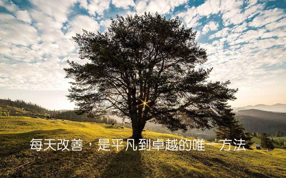tree-338211_1200