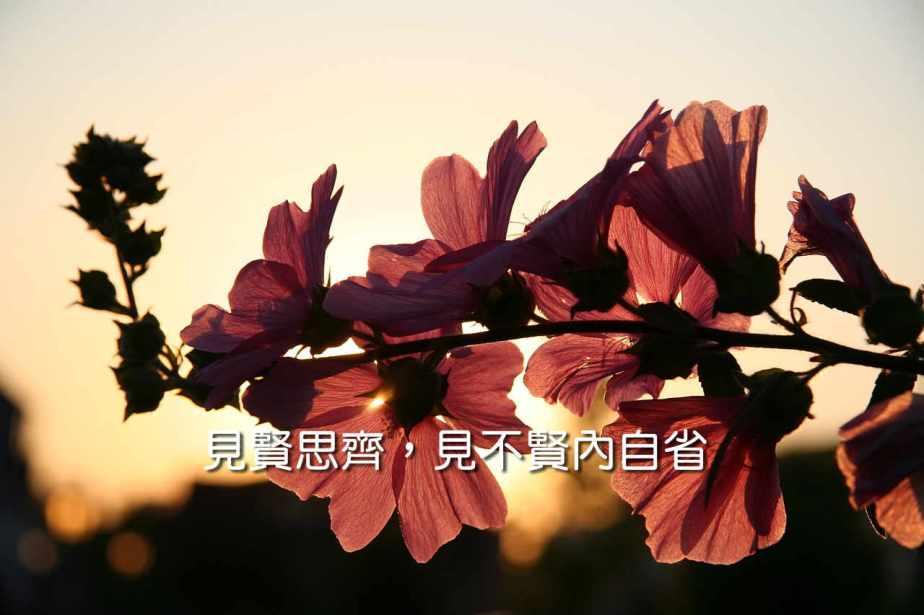 flower-646127_1280-2
