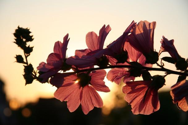 flower-646127_1280