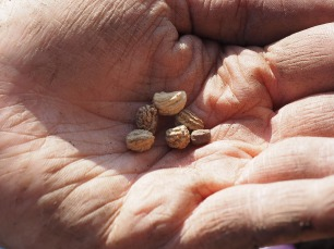 seeds-1117851_1280