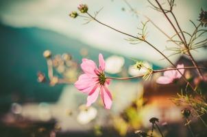 autumn-mood-1229953_1280