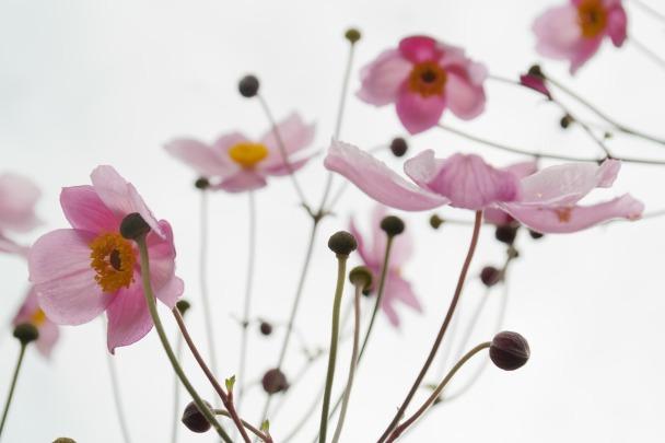 blossom-215565_1280