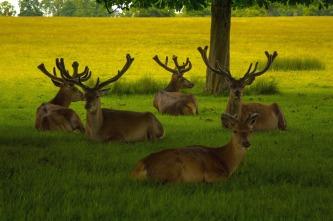 deer-893183_1280