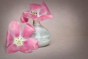 flower-1374867_1280