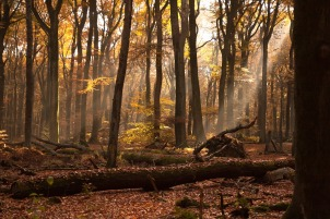 forest-1048291_1280