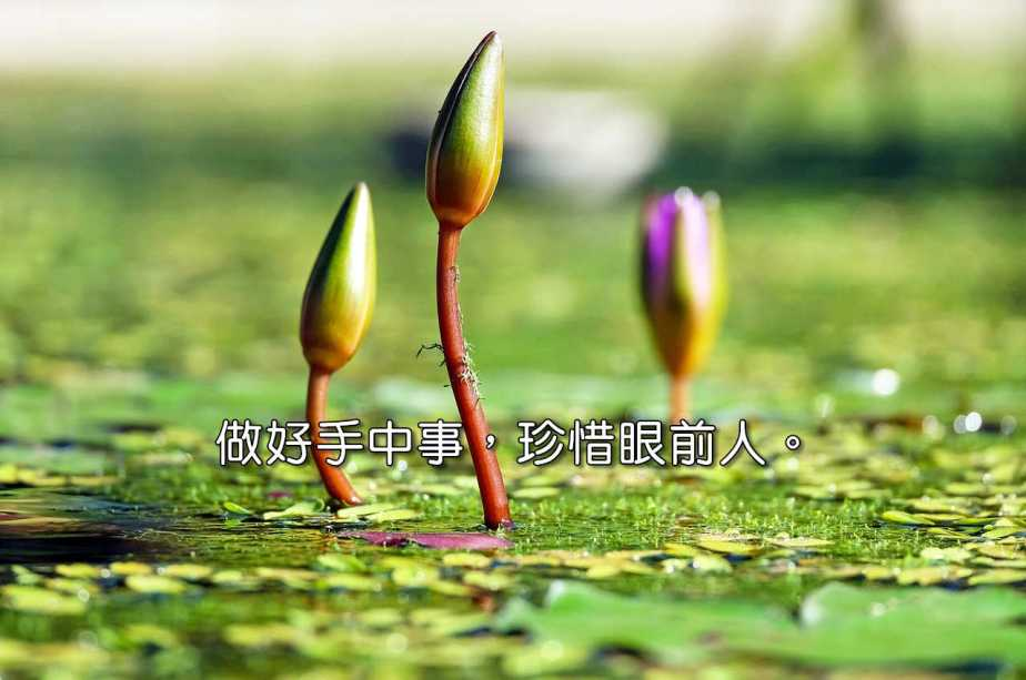 water-lilies-1388690_1280-2