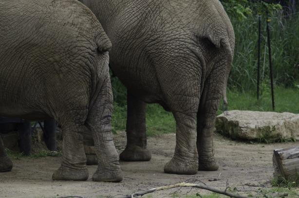 elephants-808429_1280