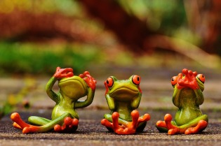 frogs-1274770_1280