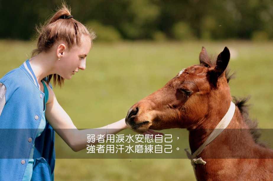 horse-1341780_1280-2