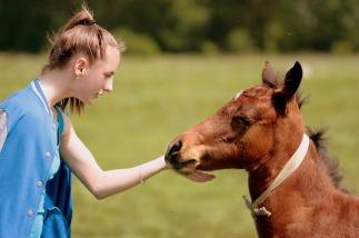 horse-1341780_1280
