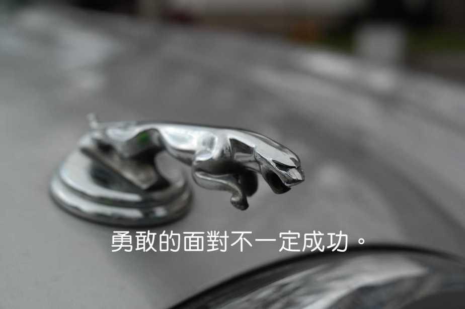 jaguar-999515_1280-2