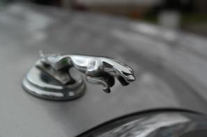 jaguar-999515_1280