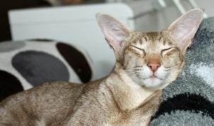cat-408784_1280
