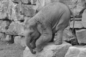 elephant-1457450_1280