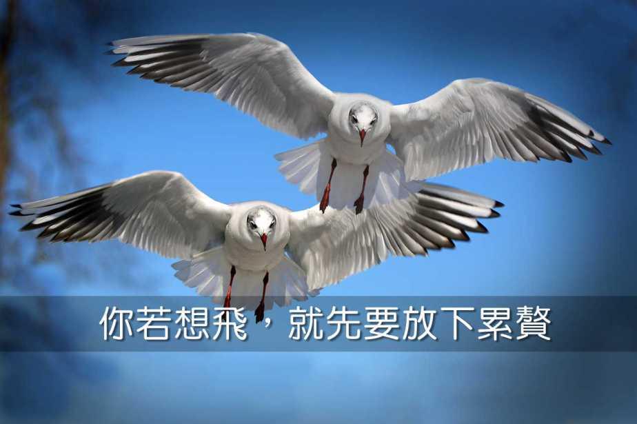 gulls-654046_1280-2