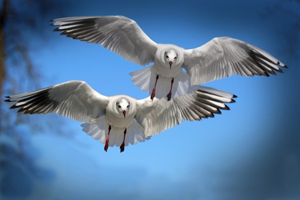 gulls-654046_1280