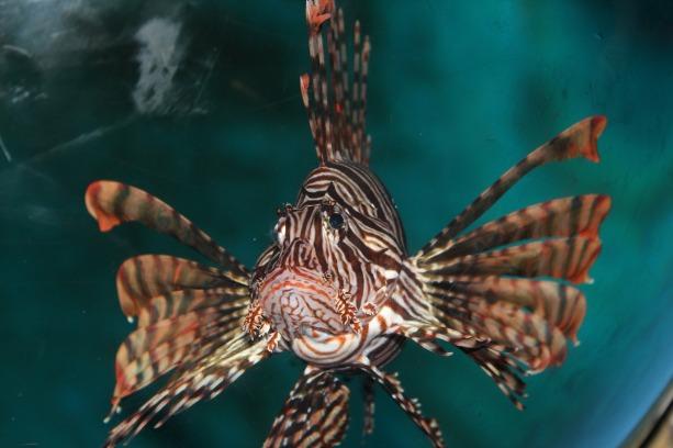 marine-fish-1253326_1280
