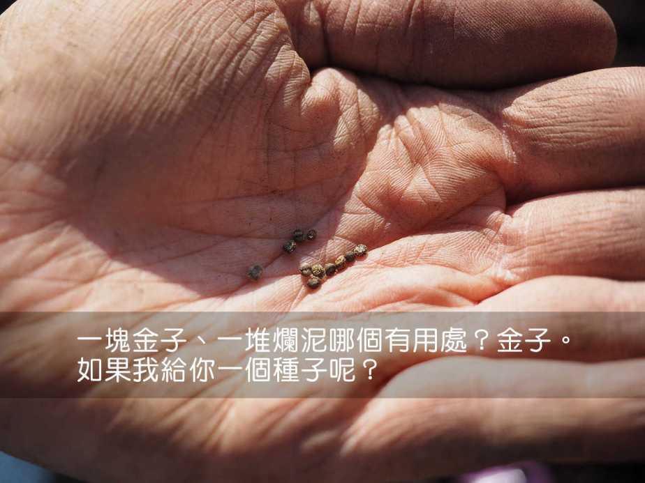 seeds-1117863_1280-2