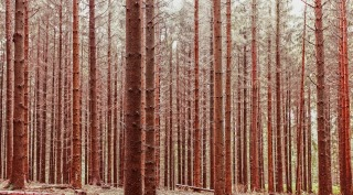 forest-trees-1149586_1280