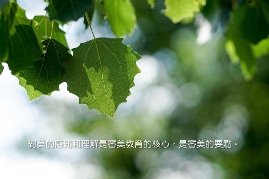 leaves-1469616_1280-2