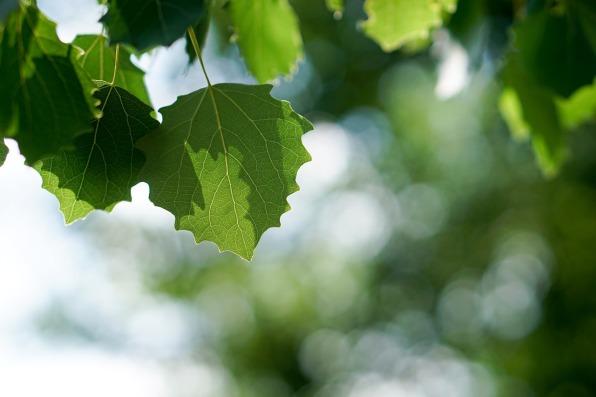 leaves-1469616_1280