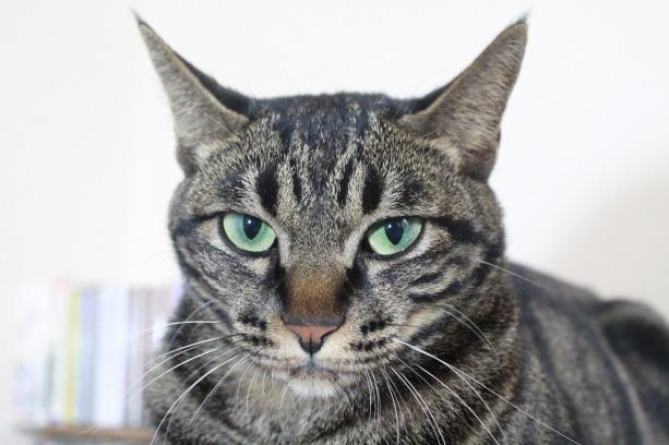 meow-meow-meow-meow-1288441_1280