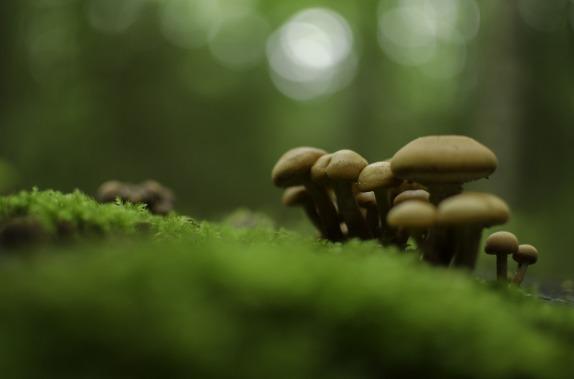 mushrooms-1077001_1280