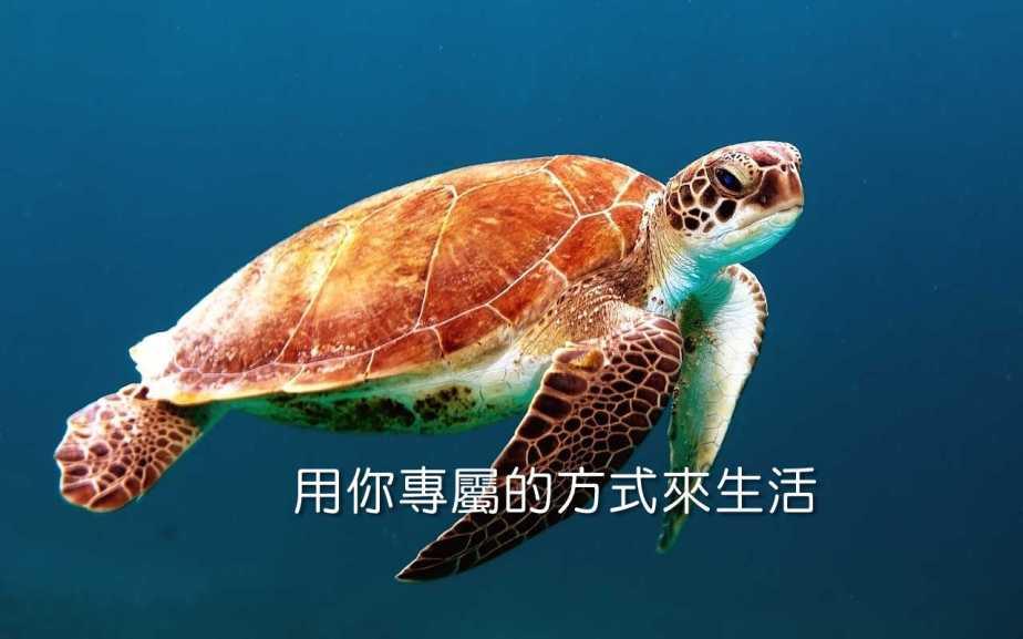 turtle-863336_1280-2