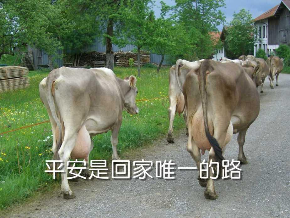 cow-359961_1280-2