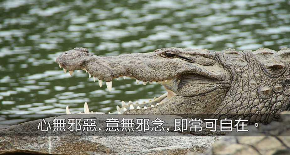 crocodile-543849_1280-2