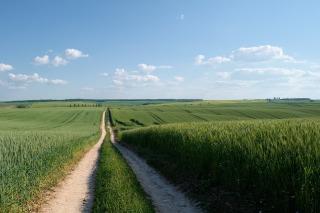field-1631544_1280