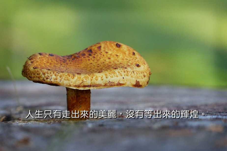 mushroom-467553_1280