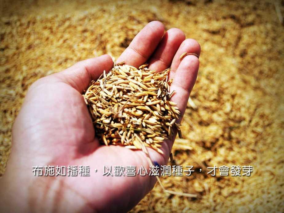 rice-1549131_1280-2