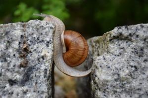 snail-1447233_1280