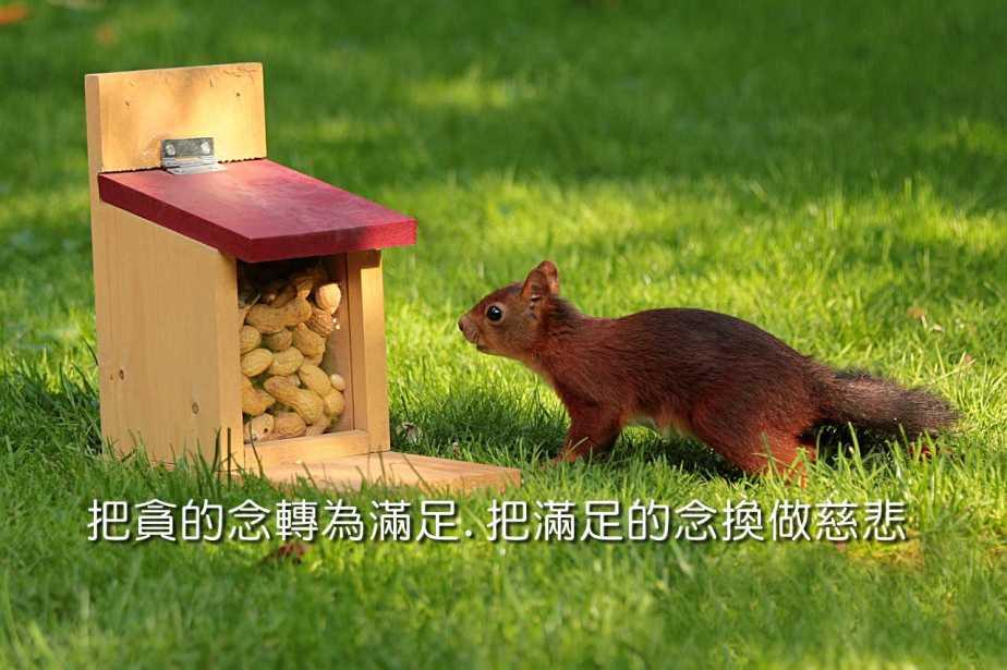 animal-927927_1280-2