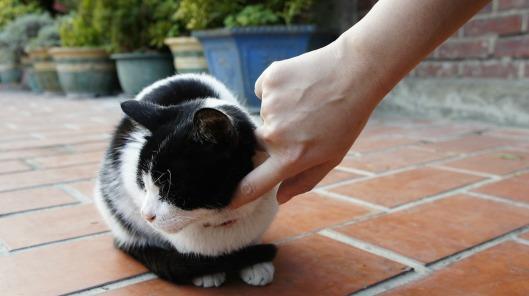 cat-75972_1280