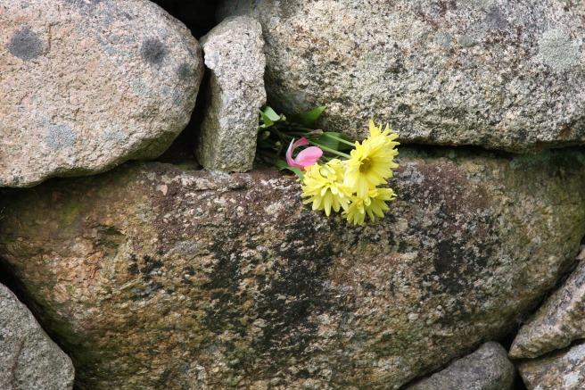 flower-in-wall-1239508_1280