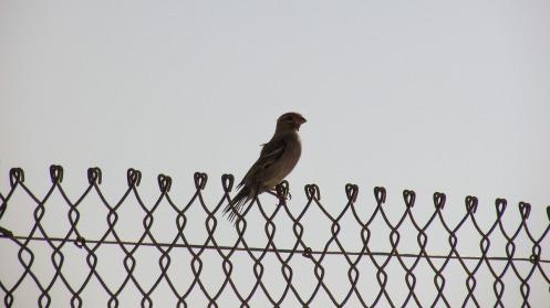 bird-1748678_1280
