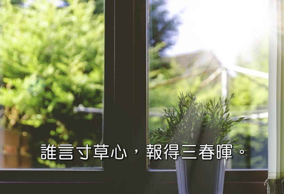 plant-1837092_1280-2