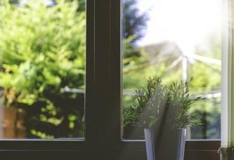 plant-1837092_1280