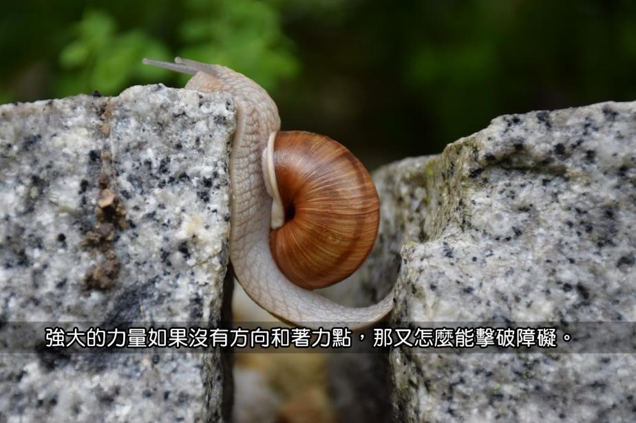 snail-1447233_1280-2